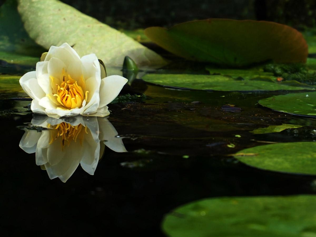 Как предотвратить цветение воды летом? Почистить пруд весной.