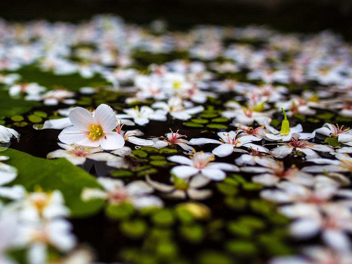 Виды растений в пруду